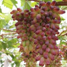 Qfg Plant Hormones Brassinolide 90% Tc