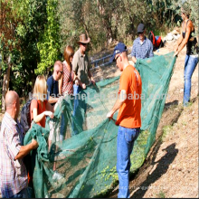 récolte professionnelle des olives - récolte en chute libre