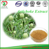 100% Natural Cynarin Artichoke Extract 2.5%, 5% Manufacturer