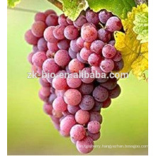 high quality food grade Resveratrol peel red Grape Skin Extract powder