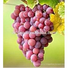 высокое качество пищевой Ресвератрол кожуры красного винограда экстракт кожи порошок
