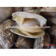 baby clam