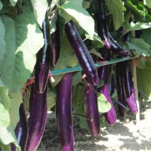 HE15 Shuliang long purple red hybrid eggplant seeds