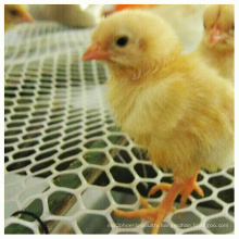 Plastic Chicken Floor Mesh