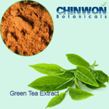 6. Antioxidants Tea Polyphenols 98% Green Tea Extract