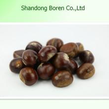 Alimentação Saudável Cru Chestnut Fresh Chestnut