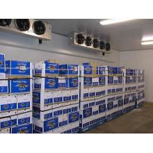 Tamanho do armazenamento frio da sala fria da refrigeração de Yuyan personalizado
