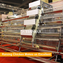 A Type Automatic Galvanized UAE Chicken Farm Poultry Equipment for Sale