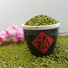 Chinesische neue Ernte Grüne Mungobohnen