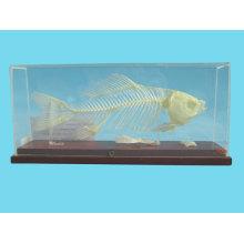 Fish Skeleto...