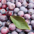 IQF Freezing/Freeze-Dried Organic Blueberry Zl-001 6