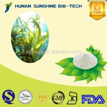 GMP Certificated Hersteller 10% -90% Fucoidan Seetang Extrakt Pulver