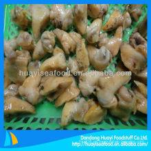 Carne de pollo congelada congelada (Buccinum Undatum)