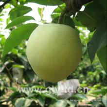 Китайская свежая зеленая изумрудная груша