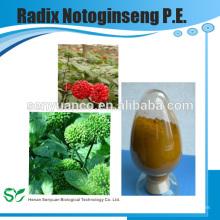 Extracto de Hierbas de Alta Calidad Radial Notoginseng PE