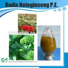 Extrait d'herbes de haute qualité Radix Notoginseng PE