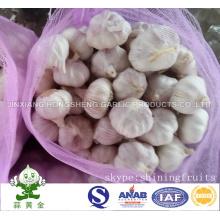New Crop Fresh Normal White Garlic Size: 5.0cm 10kgs Mesh Bag