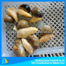 frozen good new whelk meat with excellent supplier