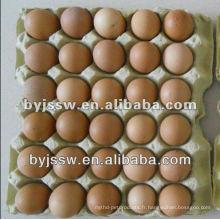 Carton d'oeuf de poulet / canard / caille