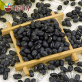 Supply All Kinds of Black kidney beabs