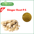 Ginger Root Extract powder Gingerols
