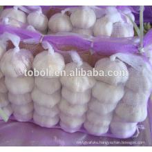 Fresh White and Pure White Garlic