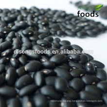 Top quality export black beans specifications