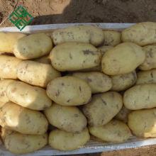 China Big Fresh Potato Supplier 100% natural purple sweet potato