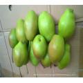 Popular sale super pear fruit with certificate