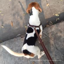 China arnês de cão cadeia retrátil macio / Pet coleiras e trelas