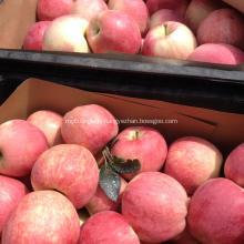 Hotsale douce et croustillante pomme étoile rouge