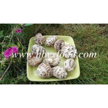 Flor blanca Setas secas Shiitake