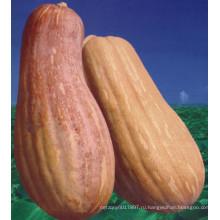 HPU16 Yugou молоток оранжевый гибрид F1 тыквы семена