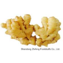 Fresh Ginger in China with High Quality