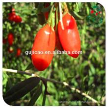 Baya de Goji orgánica certificada de la muestra libre de Ningxia