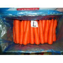 Zanahoria fresca nueva directo de granja para la venta