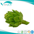 Artichoke Extract Powder