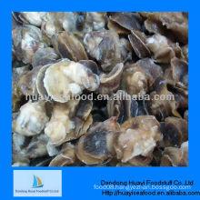 frozen boiled moon snail meat