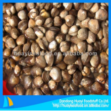 new frozen high quality superior blood clam with long term good provider