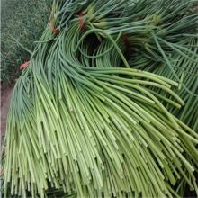 Китайский свежий чеснок мох