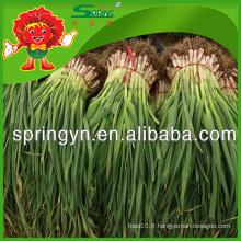 Fournisseur chinois de poireaux ail long