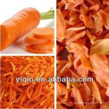 Deshidratador de zanahorias secas