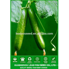 NCU161 Zican long cucumber seeds for agricultural