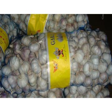 Gute Qualität Export New Crop Chinesischer Knoblauch