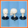 Пластическая модель черепа человека с шейным позвоночником для образования