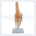PNT-0202 High quality human knee model