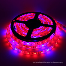 Hot sales on alibaba 5050 DC12v 5M/roll led grow light strip