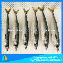 Seafrozen Mackerel Fish En Stock Pour Marché