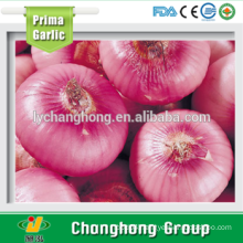 2015 new crop red onion