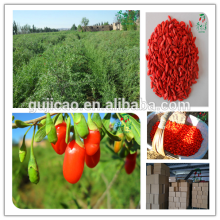 2016 china secado níspero / secado goji baya / secado chino wolfberry